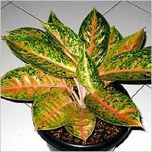 Вредные комнатные растения