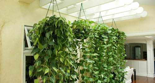 ГМО-растения