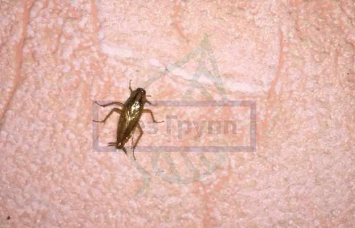 Уничтожение тараканов горячим туманом: отзывы