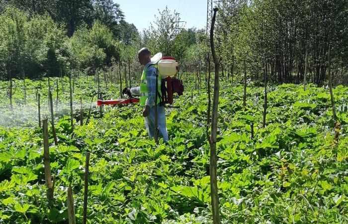Уничтожение вредителей растений профессиональными методами