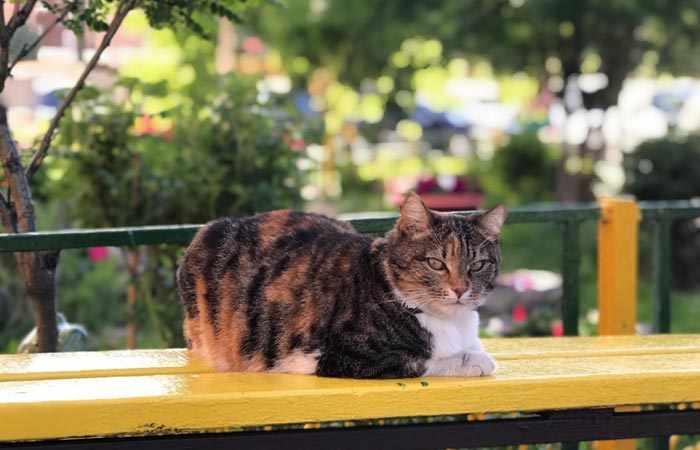 Удаление клещей у кошек в Москве