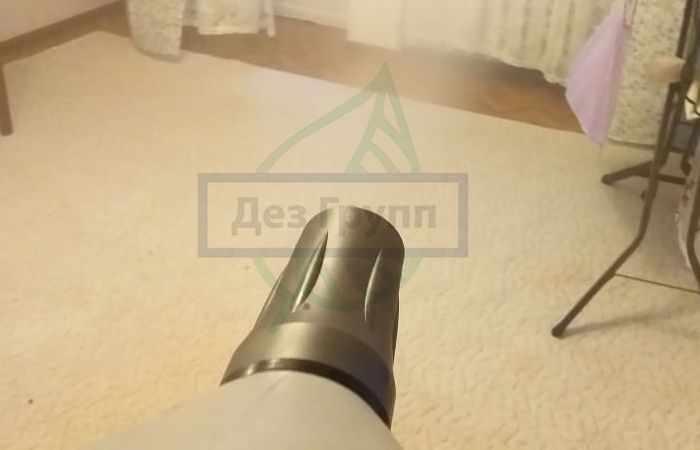 Мучной хрущак в квартире - что делать
