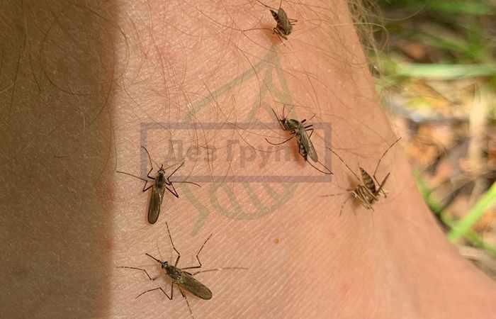 Услуги по уничтожению насекомых - комаров