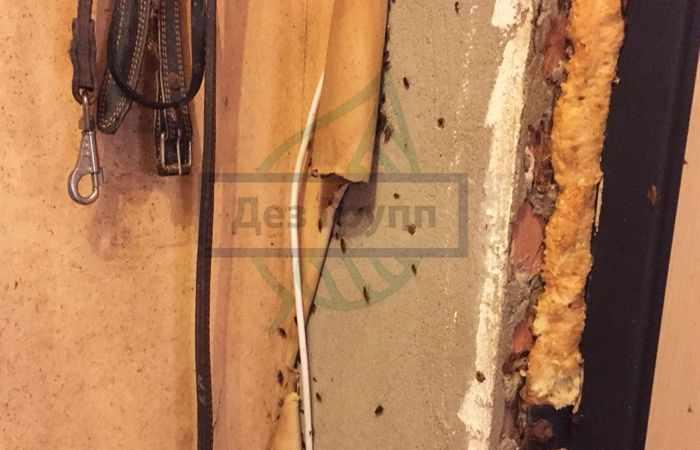 есть ли в доме тараканы