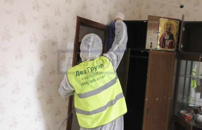 Дезинсекция от муравьев в квартире профессионалами