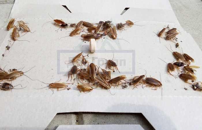 Выведение тараканов в доме
