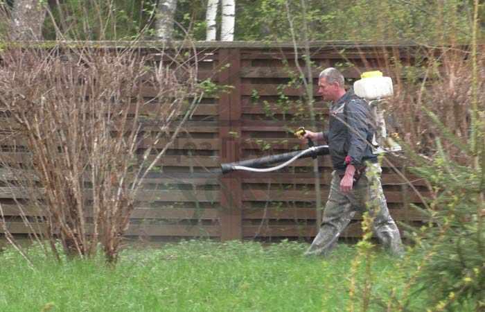Профессиональная обработка от насекомых в огороде
