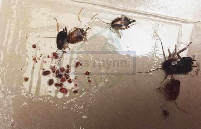Средство от тараканов - Гели
