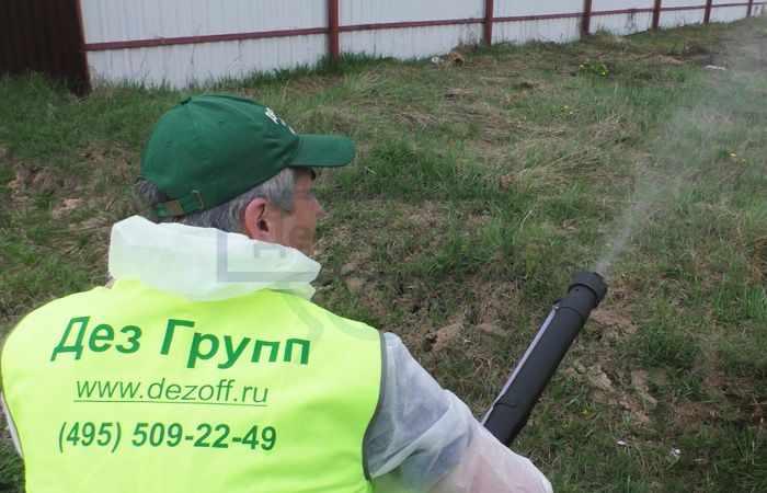 Чем обработать землю от медведки в Москве