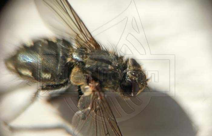 Флай байт уничтожает мух