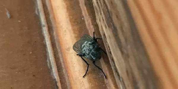 Слепень размножение насекомых