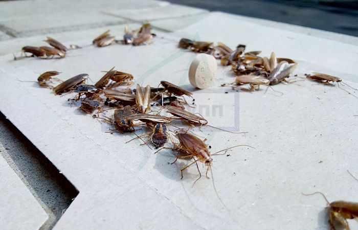 Профессиональная дезинсекция от тараканов компанией Дез Групп