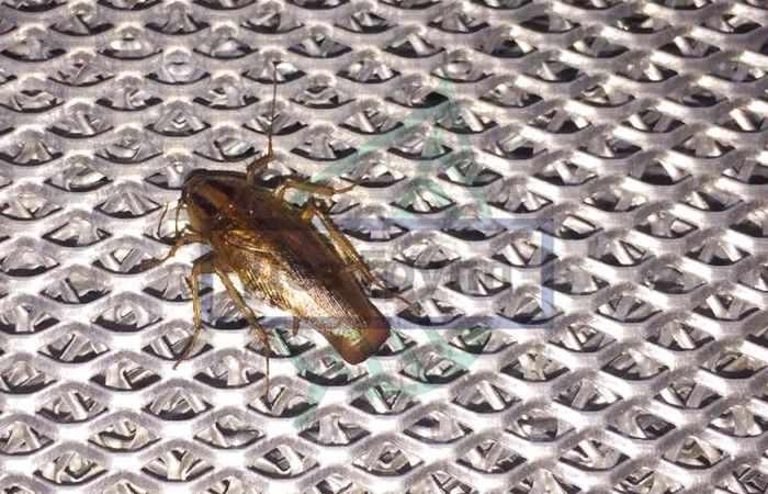 Избавление от тараканов Москва