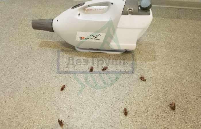 Тараканы погибают сразу после обработки