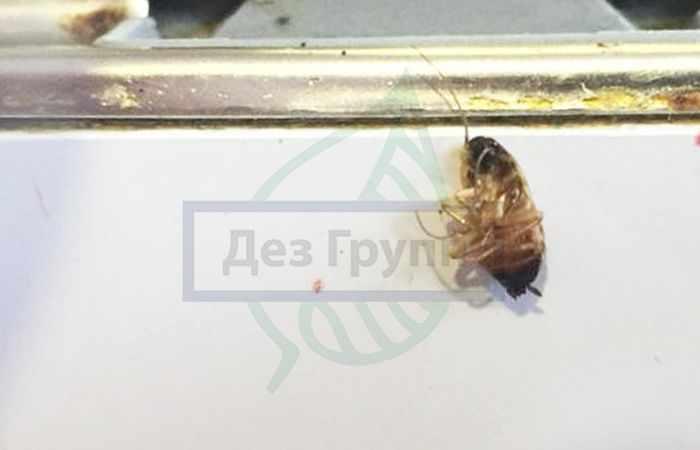 Комплексная обработка помещений от тараканов