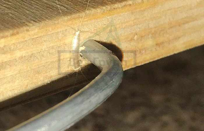 В ванной ползают серебристые насекомые - чешуйницы