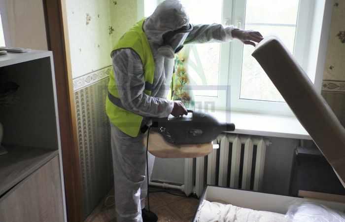 Как избавиться от домашних муравьев в квартире в Москве