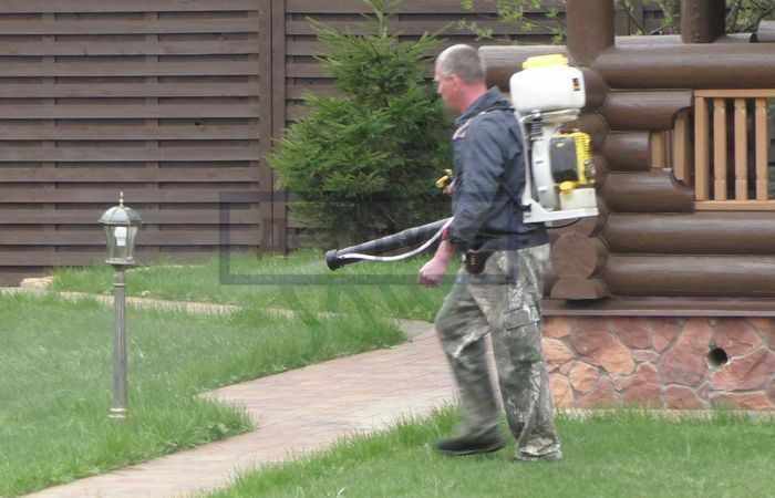 Как избавиться от ос на даче в доме - профессиональная служба
