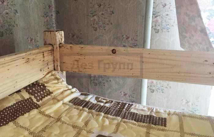 Морить тараканов в квартире Москва стоимость