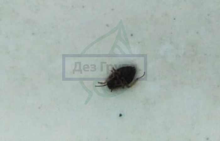 Черные тараканы в доме