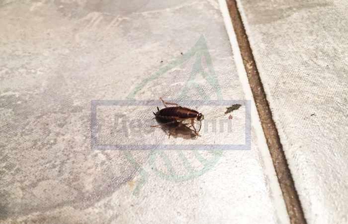 Как тараканы попадают в квартиру - вентиляция,канализация