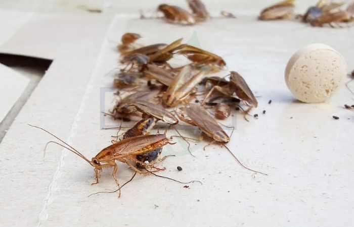 Истребление тараканов в квартире