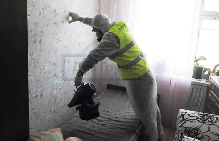 как избавиться от пауков в Москве