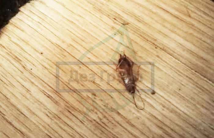 Комбат против тараканов