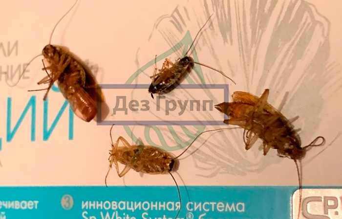Откуда тараканы в новостройке - из подвала
