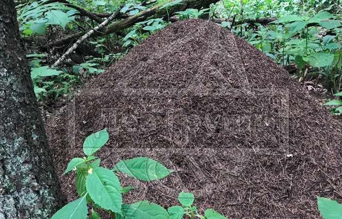 Как избавиться от муравьев на участке навсегда в Москве
