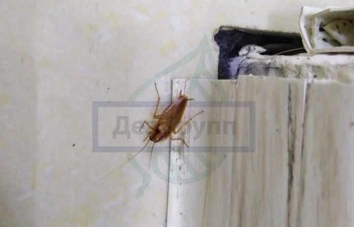 Почему появляются тараканы в квартире