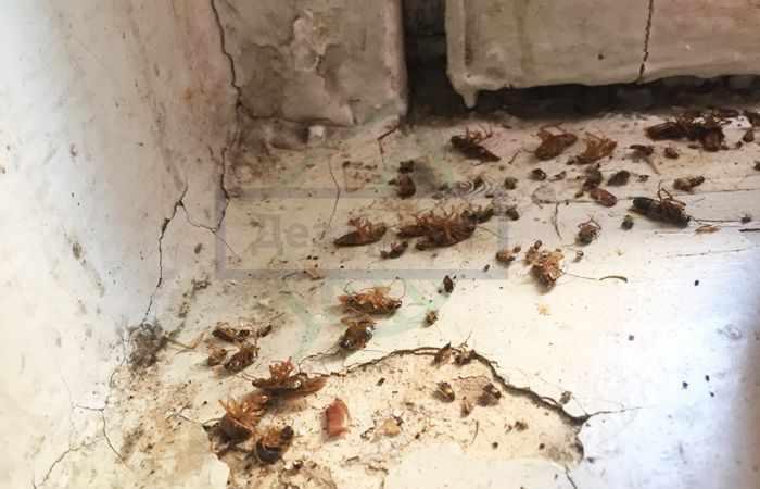 Уничтожение тараканов холодным туманом: отзывы