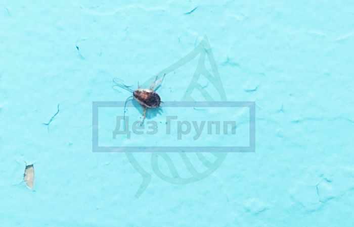 Маленькие черные тараканы в квартире