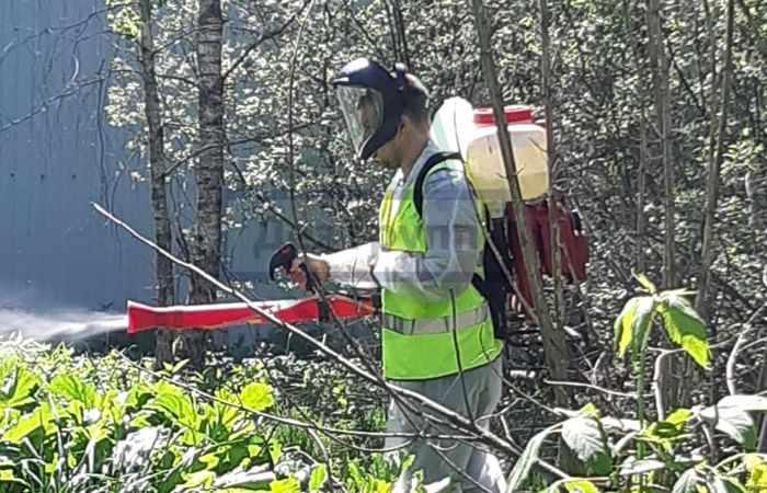Обработка участка от комаров и клещей в Москве