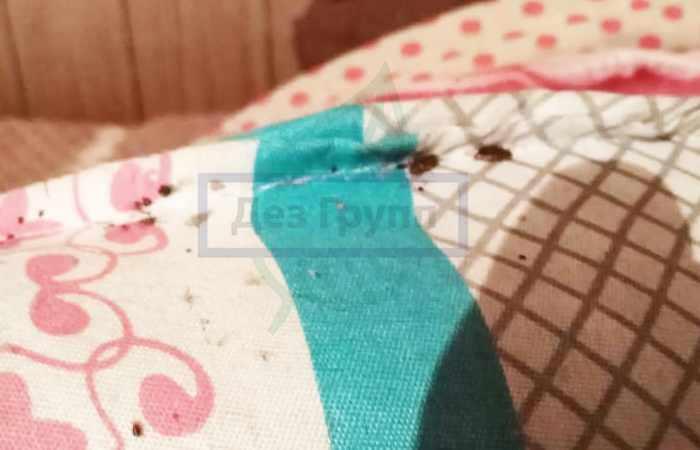 Как искать постельных клопов - по пятнам
