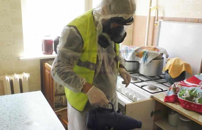 Как уничтожить чешуйниц в квартире туманом