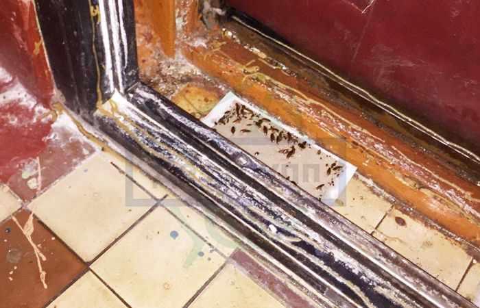 Черные тараканы в квартире: откуда они берутся?