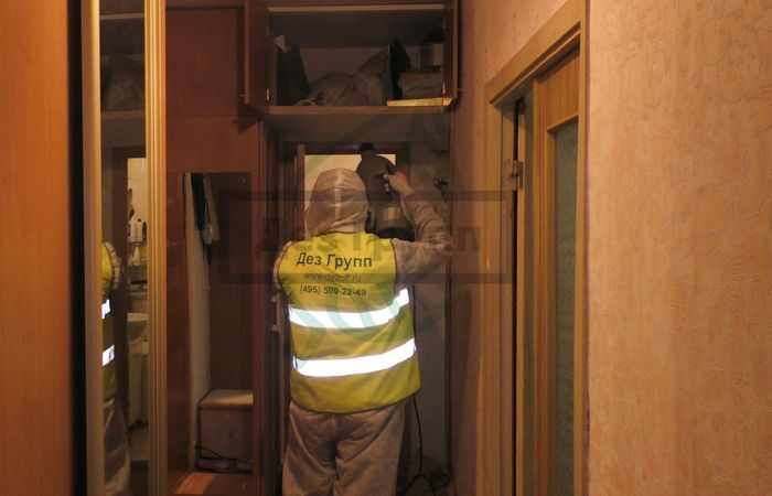 Обработка квартир от насекомых - уничтожение насекомых и личинок