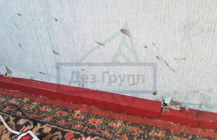 Тараканы в квартире - следы