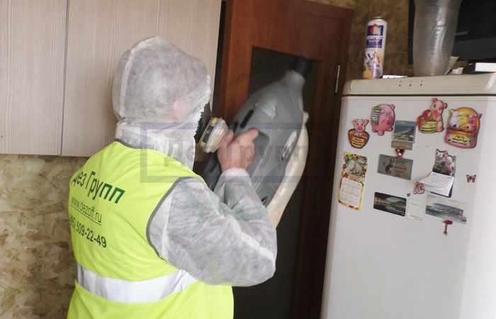 Уничтожение насекомых в квартире: специализированные службы