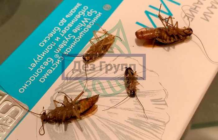 Дезинфекция дома цена на уничтожение насекомых