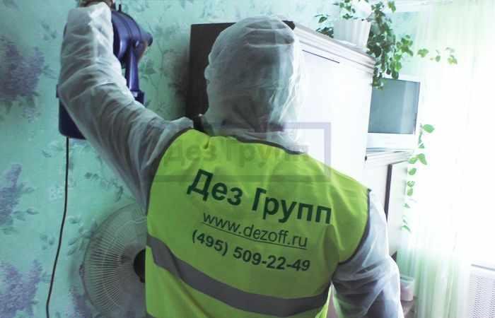 Крылатые муравьи дома как от них избавиться в Москве