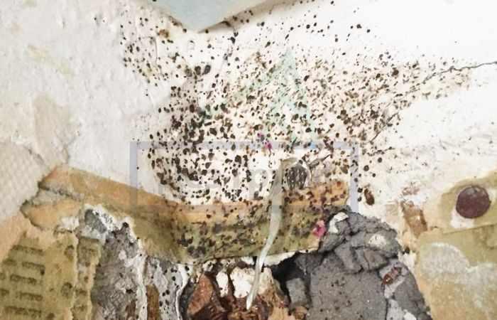 Почему на стенах появляется черная плесень
