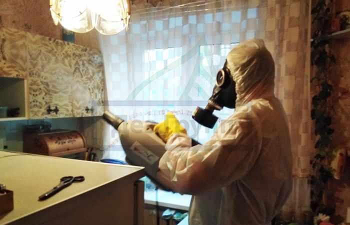 Как избавиться от бабочницы в квартире в Москве
