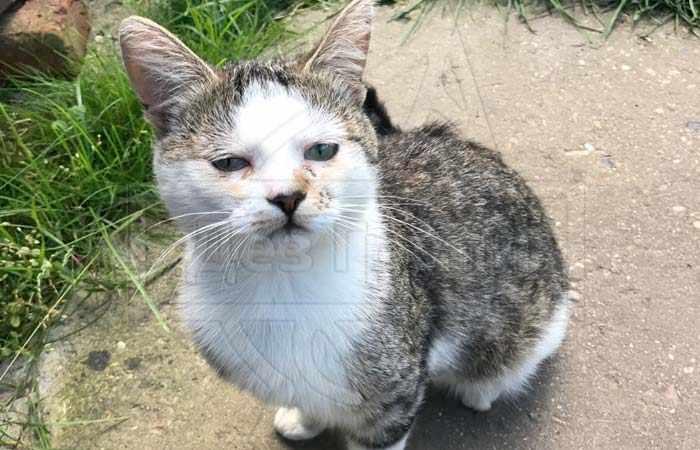 Боятся ли крысы кошек - кошки не часто вступают в схватку с крысами