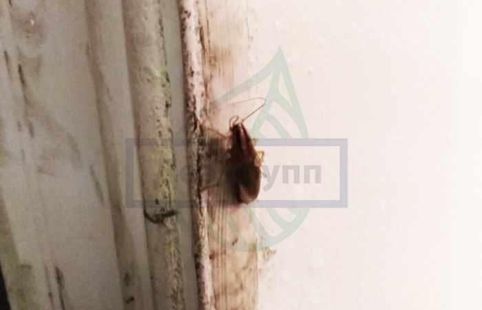 Чем питаются тараканы дома