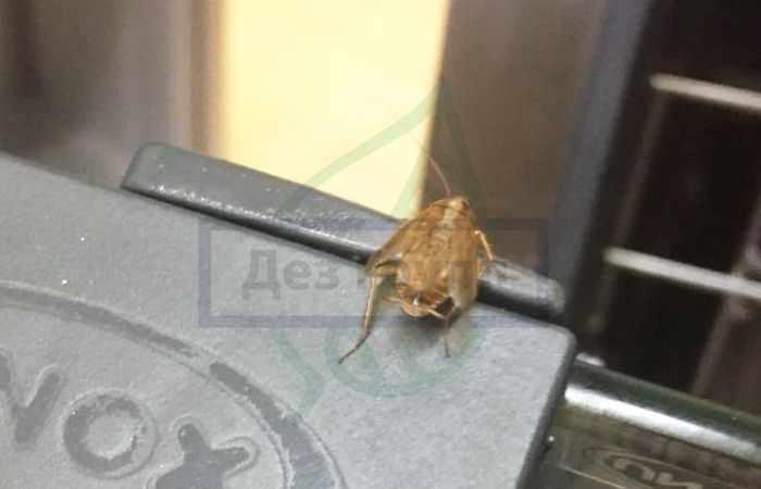 Тараканы в магазине: куда обратиться