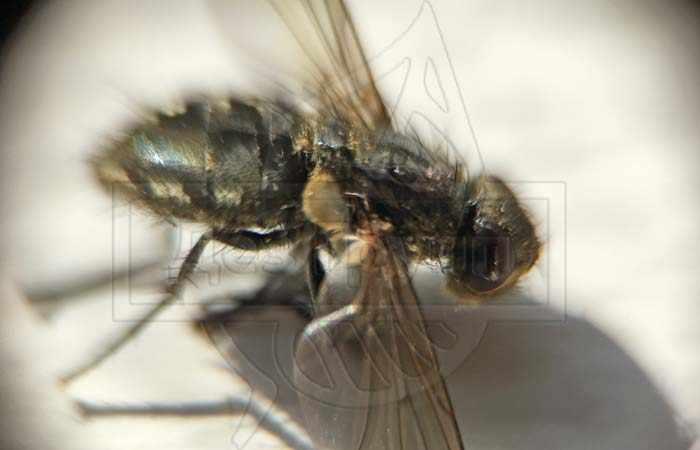 Уничтожение мух и других насекомых