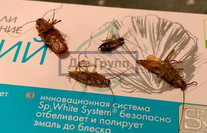 Чем опасны тараканы в квартире
