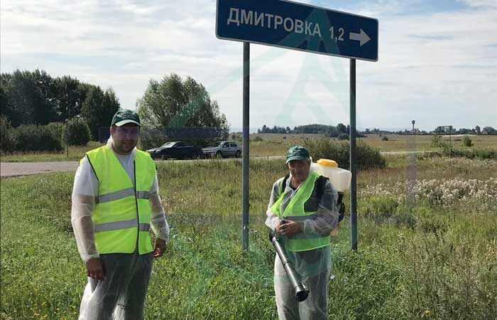 Клещи в Подмосковье 2018: опасные районы от Дмитровского до Талдомского